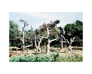 Woodland Scenics Dead Tree Kit | relatedproducts