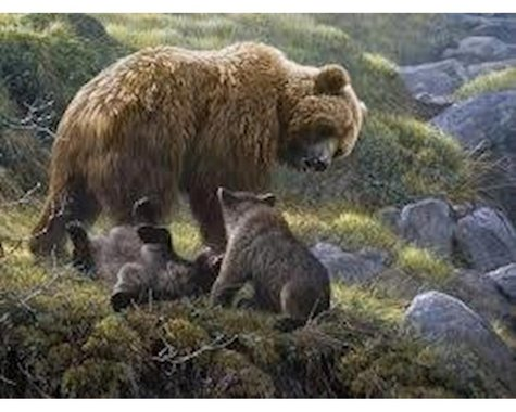 Cobble Hill Puzzles Cobble Hill Grizzly and Cubs Jigsaw Puzzle (400 pieces)