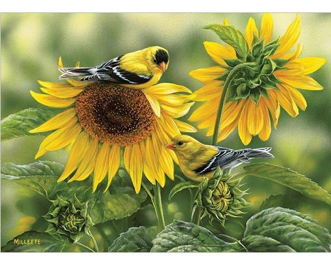 Cobble Hill Puzzles Cobblehill 80115 1000 pc Sunflowers and Goldfinches Puzzle, Various