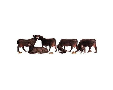 HO Black Angus Cows