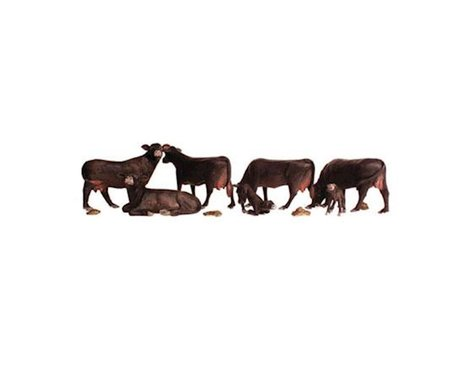 N Black Angus Cows