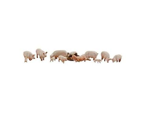 N Yorkshire Pigs