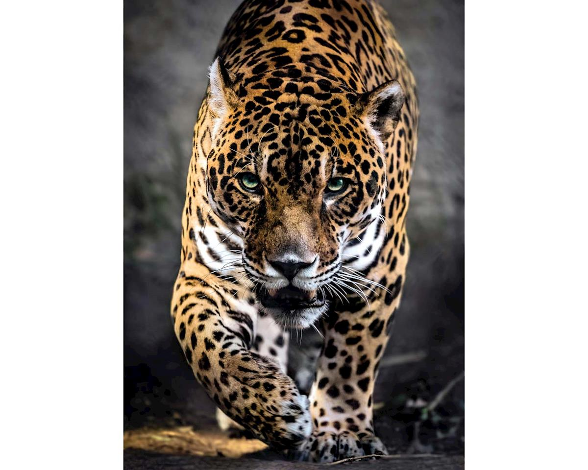 Creative Toy Company 39326 Awalk Of The Jaguar 1000pcs
