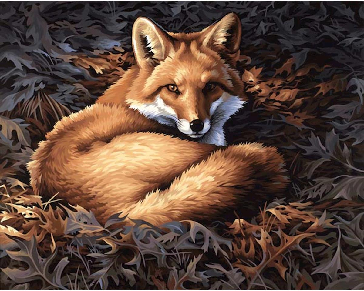 Dimensions 91380 Sunlit Fox PBN