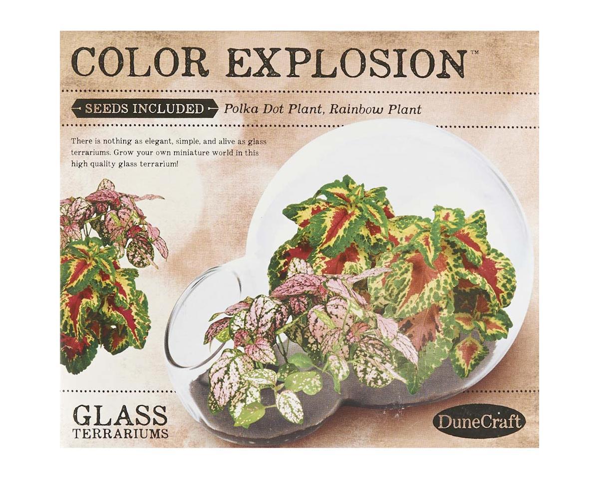 DD-0743 Color Explosion