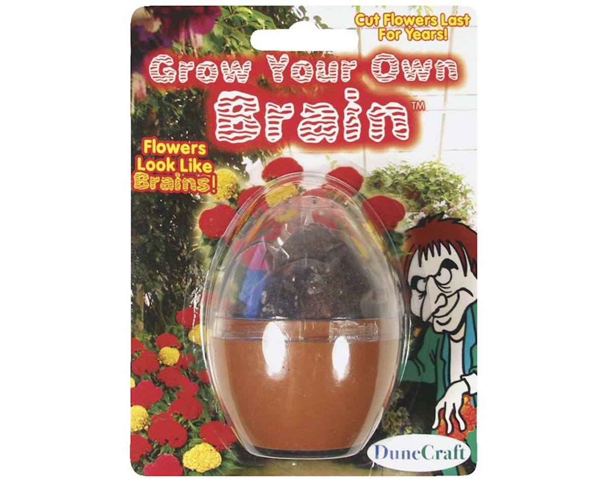 MT-G134 Grow Your Own Brain Kit by Dunecraft