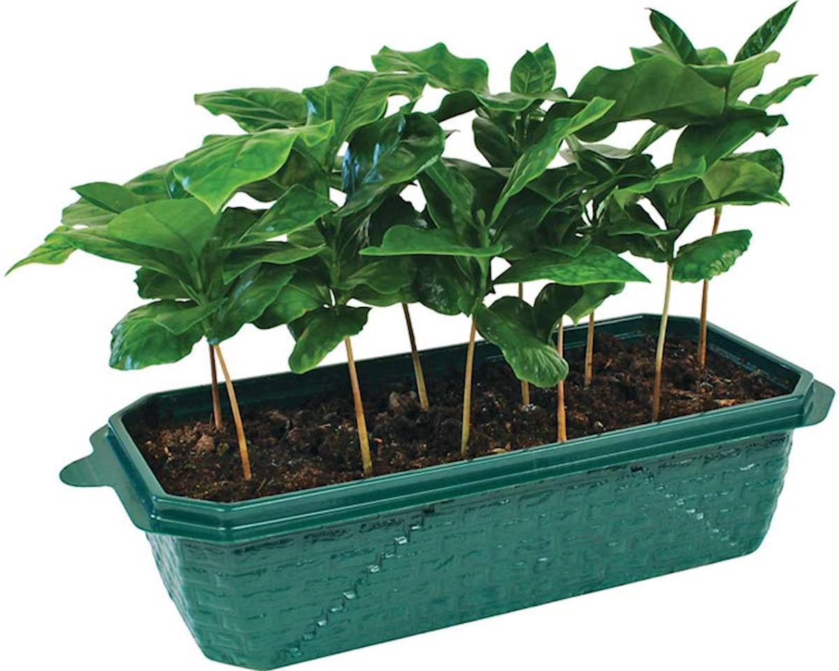 Dunecraft SG-0106 Coffee Garden Kit