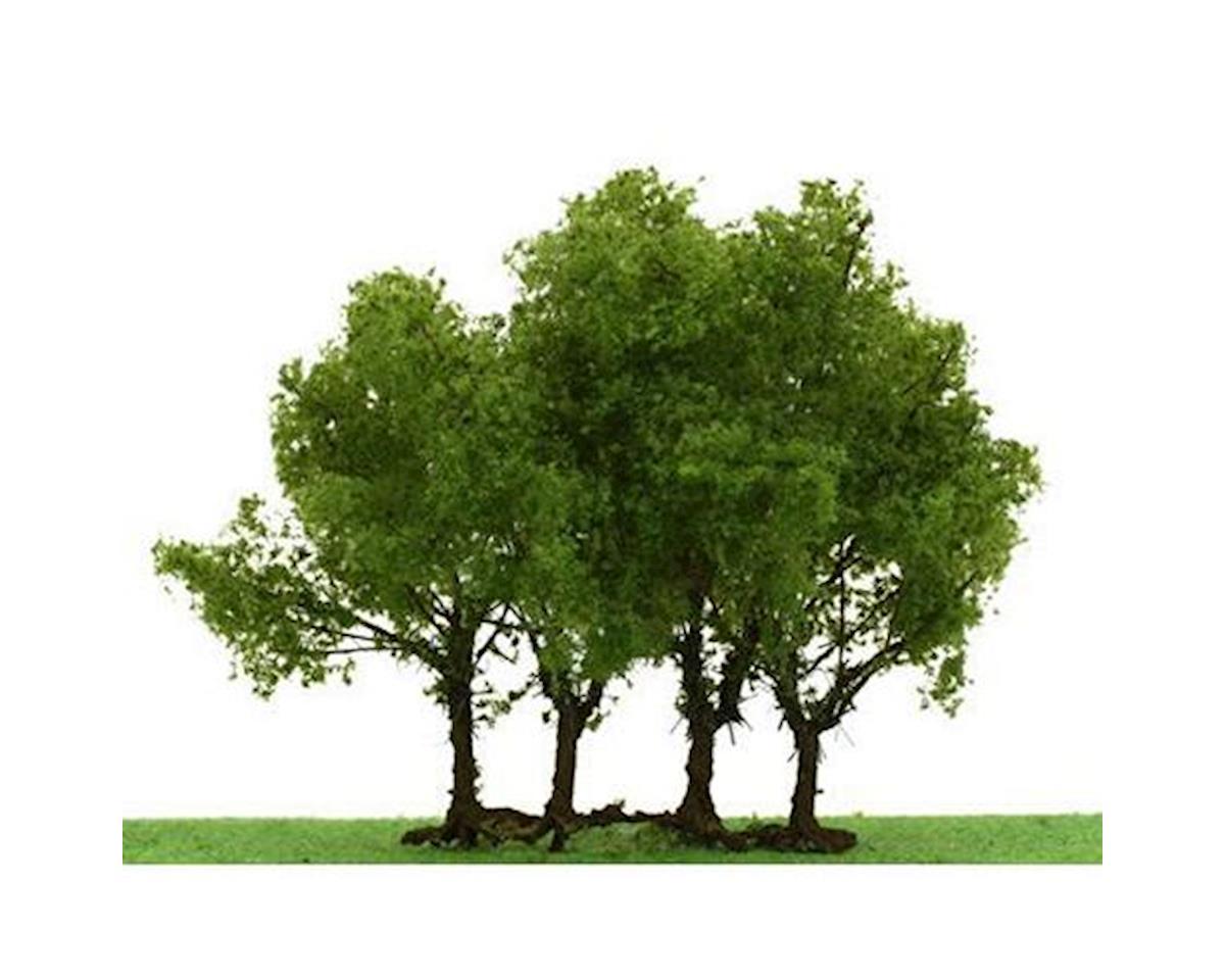 "Pro-Elite Tree, Privet 3-3.5"" (1)"