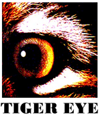 Popular Products by Tiger Eye